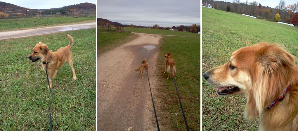 Tails And Trails Dog Walking Pet Sitting
